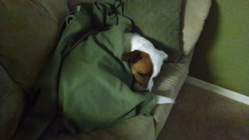 Blanketed Riley